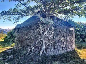 Protea Ridge Culture